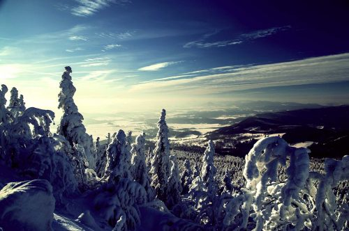 Snowing Mountainside Trees